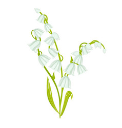 Cartoon lily of the valley spring flower vector