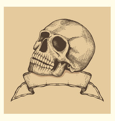 human skull sketch with ribbon banner vector image