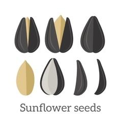 Sunflower Seeds in Flat Design vector image