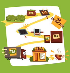 Tea production tea manufacturing process from vector