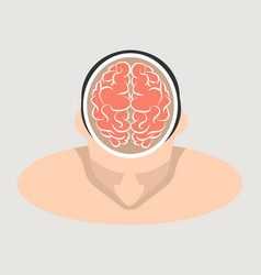 top view human brain vector image