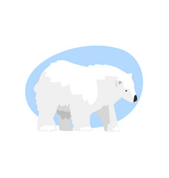 white arctic bear animal on a vector image