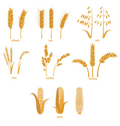 cartoon cereals grain set vector image