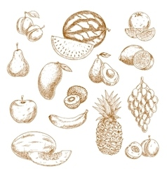 Whole and halved fresh fruits vintage sketch icons vector image