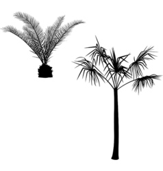 with palm silhouettes vector image vector image