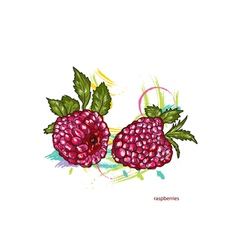 raspberries with colorful splashes vector image vector image