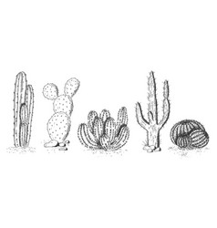desert cactuses and succulents set vector image
