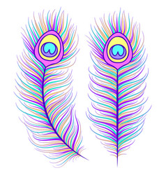 Feathers on white background vector