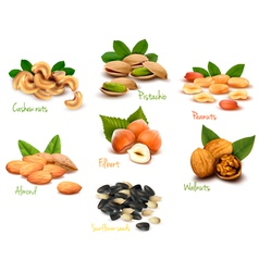 Fresh nuts set vector image vector image