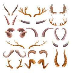 horns collection with colorful hunting trophies vector image