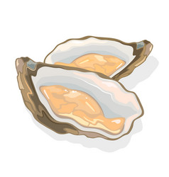 Opened shellfish oysters with soft body in a vector
