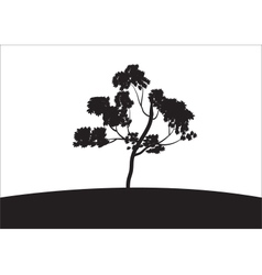 Silhouettes of trees grow vector