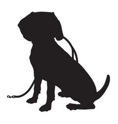 beagle silhouette leash vector image