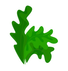 Frisee lettuce icon cartoon style vector