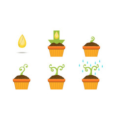 plant growing stages set growth plant in pot vector image