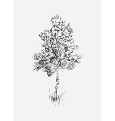 Sketch of birch isolated on white vector image