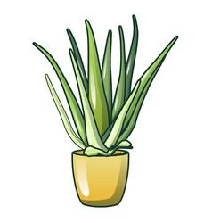 aloe vera pot icon cartoon style vector image