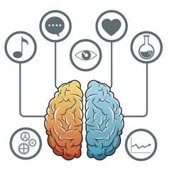 brain progress network media vector image