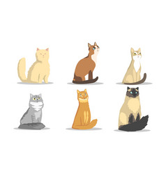 collection different cats breeds lovely vector image