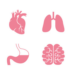 icons of human organs heart lungs stomach brains vector image