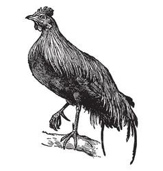 Jungle fowl vintage vector