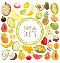 tropical fruits exotic meal avocado durian vector image