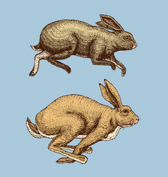 Wild forest animal jumping up hare and rabbit or vector