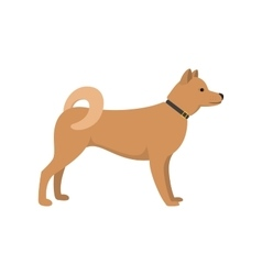 Akita Inu - dog asian breed on white background vector image