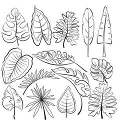Leaves tropical leaves vector