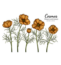 Orange cosmos flower and leaf drawing with line vector