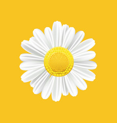 chamomile realistic symbol yellow background with vector image vector image