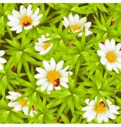 chamomiles and ladybugs vector image