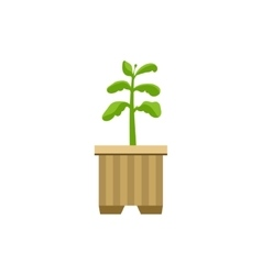 Sprout in a crate vector