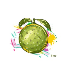 lime with colorful splashes vector image vector image