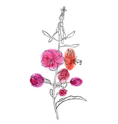 Drawing flower of willow herb vector