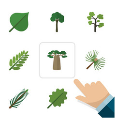 Flat icon natural set of leaves spruce leaves vector