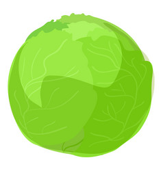 green cabbage icon cartoon style vector image