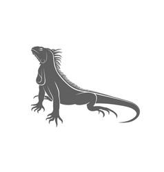 iguana gray vector image