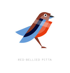 abstract of red bellied pitta vector image vector image