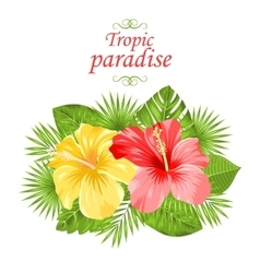 beautiful colorful hibiscus flowers blossom vector image
