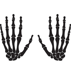 Bones of the hand vector