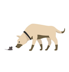 funny cartoon little dog sniffs mouse vector image