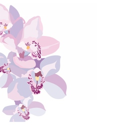 Orchid flowers isolated vector image