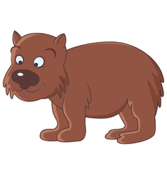 wombat vector image