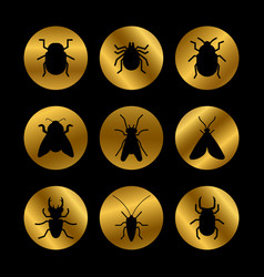 black insects silhouette on golden rounds vector image vector image