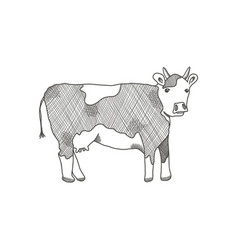 black outline cow on white background vector image
