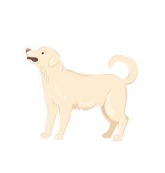 Cute labrador dog vector