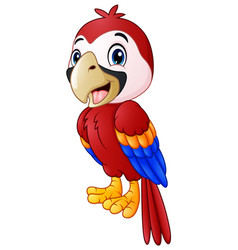 funny macaw bird cartoon vector image