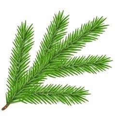 Green lush spruce branch Fir branch vector image