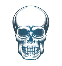 image of the skull vector image vector image